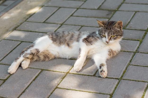 天気の良い日陰の歩道に白い斑点のある猫が横たわっています_