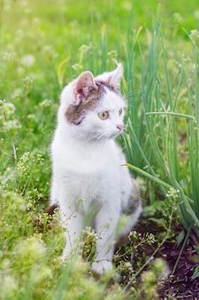 白い斑点のある猫が草の間の庭に座っています_