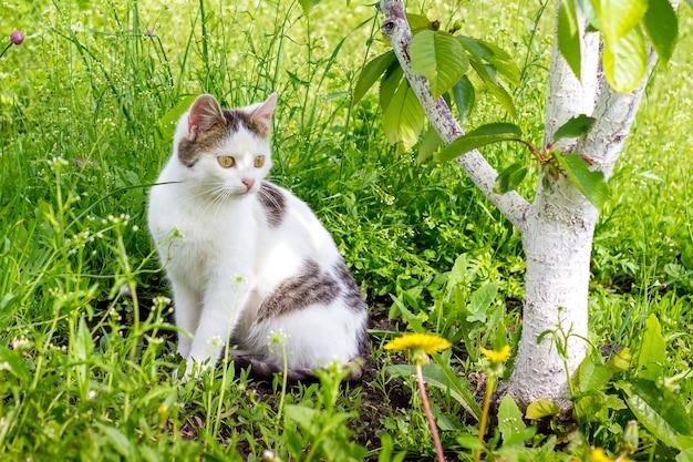 白い斑点のある猫が木の近くの草の上の庭に座っています