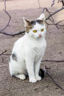 白い斑点のある猫が地面に座って目をそらす