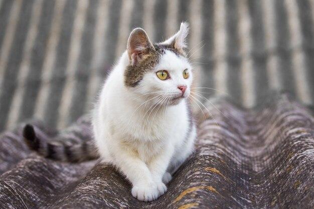 家の屋根に座っている白い斑点のある猫