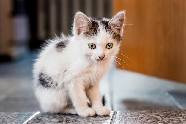 Пятнистый котенок сидит на полу в комнате