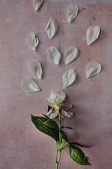 분홍색 오래된 콘크리트에 빗방울처럼 떨어지는 녹색 잎과 꽃잎이 있는 흰색 시든 모란 꽃