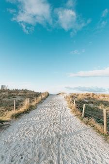 Широкоугольный снимок песчаной дорожки к пляжу в окружении растений в ясный весенний день.