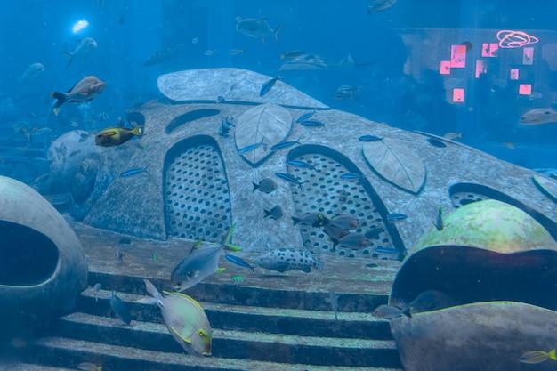 Большое разнообразие рыб (более 500 видов рыб, акул, кораллов и моллюсков) в огромном аквариуме в отеле atlantis на острове хайнань. санья, китай.
