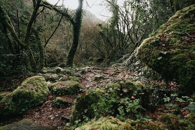 ガリシアの真ん中にある野生の森