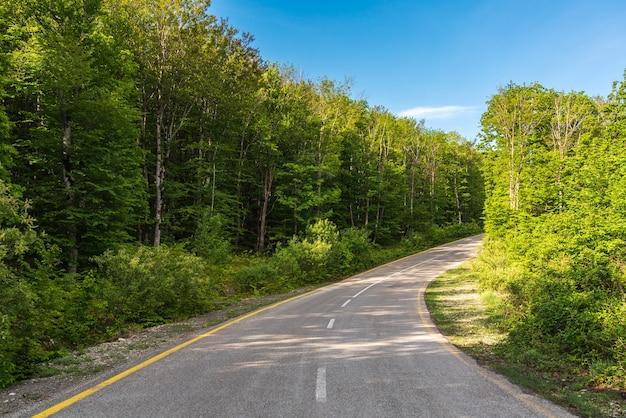 緑の森の曲がりくねったアスファルト道路