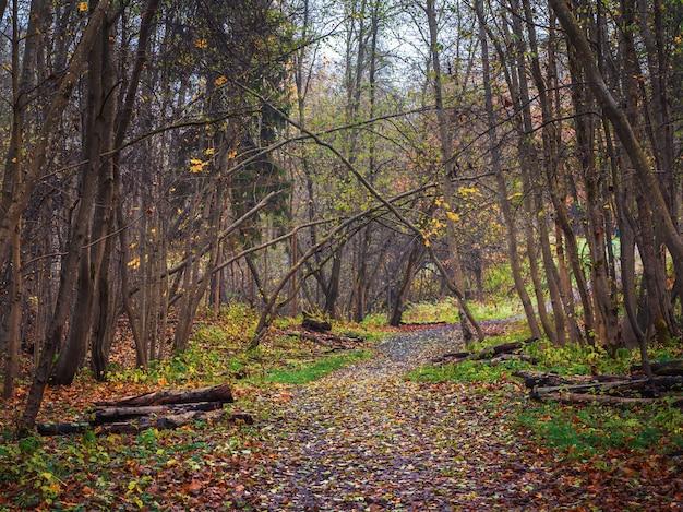 朝の春の森を抜ける曲がりくねった道。枯れ木の森を一掃する春。輸出用に準備された枝の山がある森の路地。