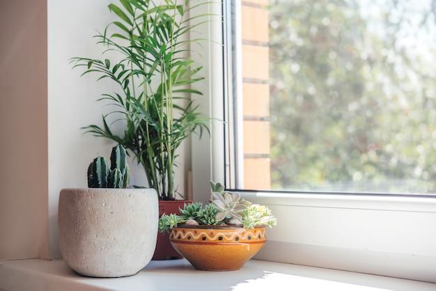 화분에 심은 선인장 다육 식물과 잎이 많은 식물이 있는 창턱