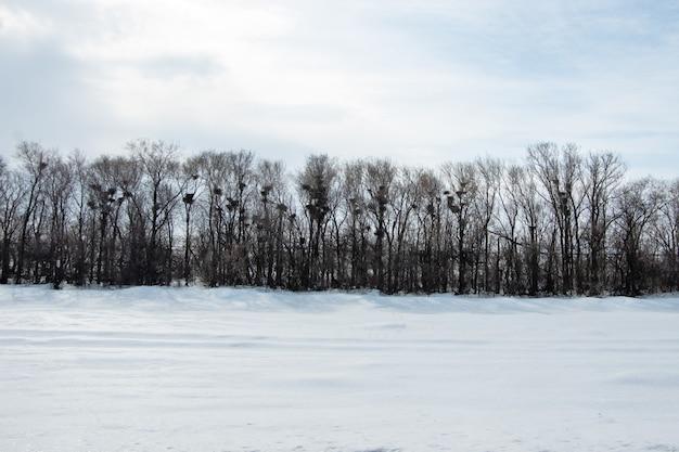 葉のない冬の森、枝には空の鳥の巣がたくさんあります