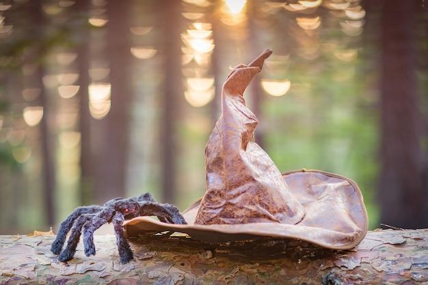 마녀의 모자와 숲 속의 거미.