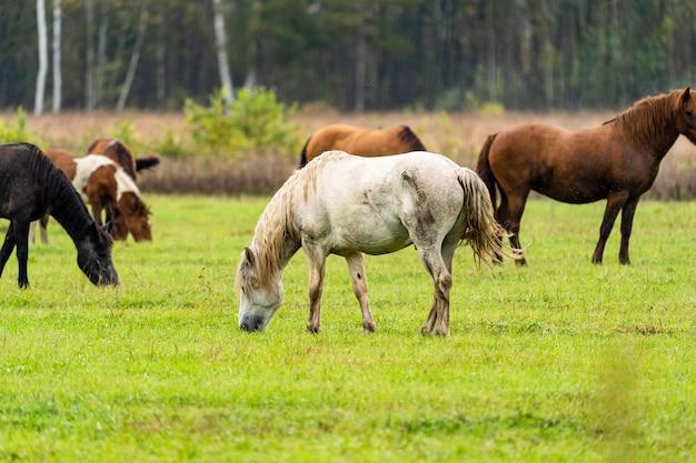 Бело-коричневая лошадь ест листья с дерева, спрятанного