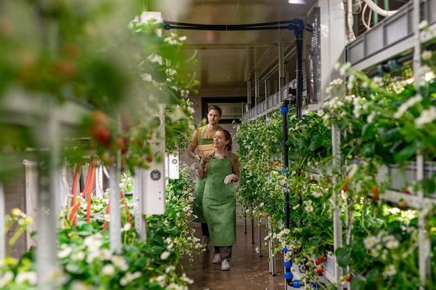 大規模な垂直農園内の通路を歩いている女性と男性