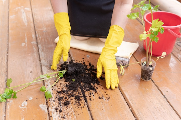 한 여자가 정원 바닥에 묘목을 떨어뜨렸다