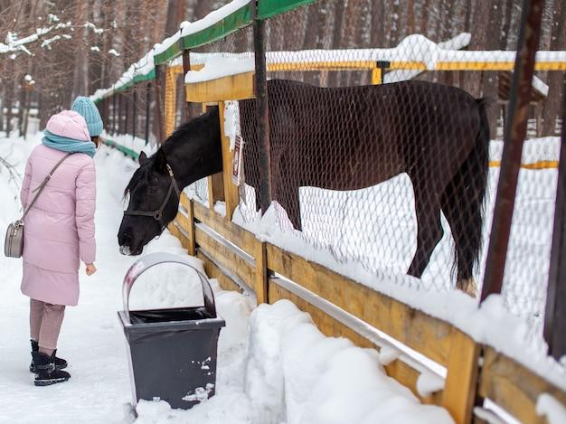 한 여자가 겨울에 동물원에서 말에게 먹이를줍니다. 말은 울타리를 통해 머리를 찔러 먹고