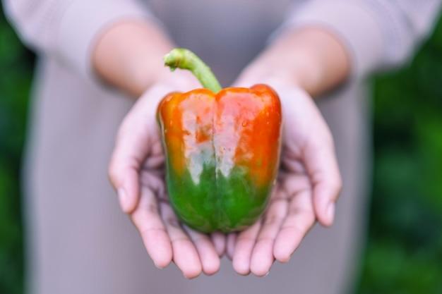 Женщина держит в руке свежий болгарский перец