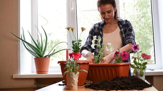 방에 있는 파란색 체크무늬 셔츠를 입은 여성이 발코니 화분에 피튜니아 꽃을 심습니다