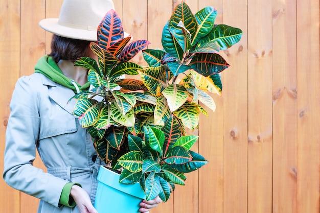 レインコートと帽子をかぶった女性が鉢植えのクロトンの花を持っています。天然木の背景