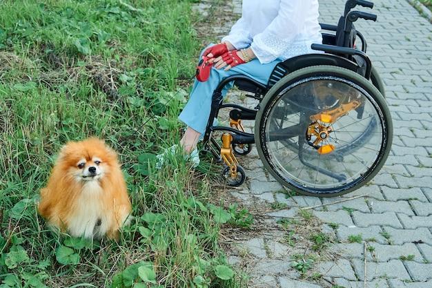 Женщина в инвалидной коляске гуляет со своей собакой на открытом воздухе. международный день людей с ограниченными возможностями