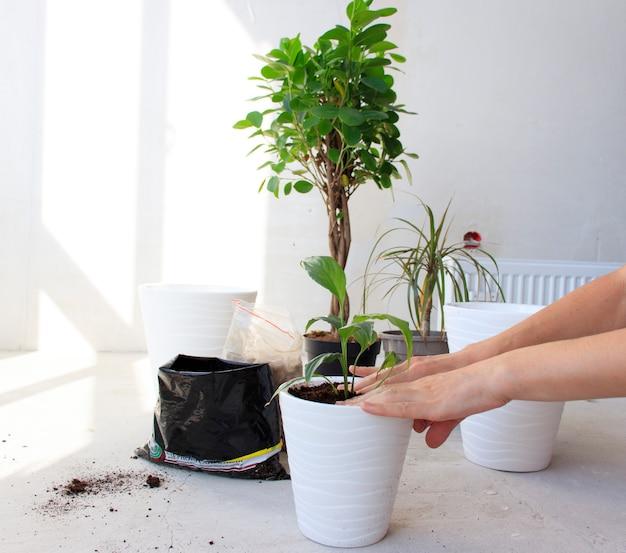 Женщина в цветных перчатках пересаживает саженцы цветов