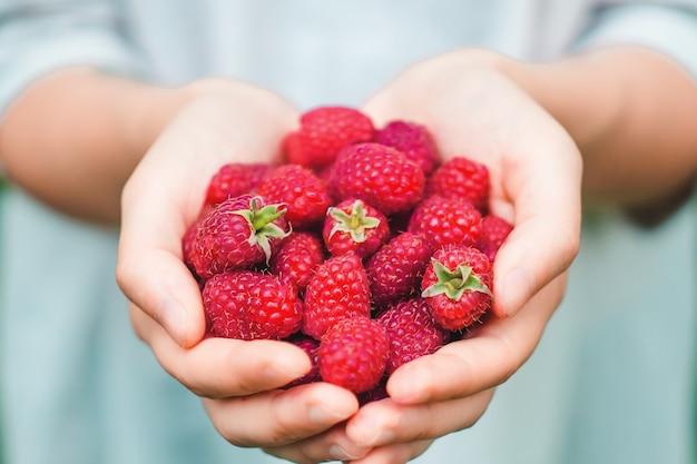 Женщина или девушка держит в руках только что лесную малину. лето, солнце, концепция органических ягод.