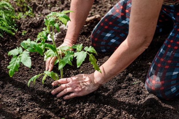 Женщина сажает в своем саду саженец петунии