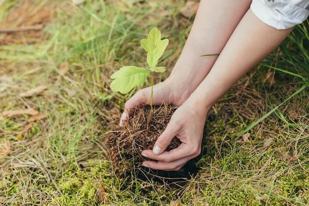 Женщина сажает в лесу небольшой дуб, волонтер помогает сажать новые деревья в лесу, фото крупным планом
