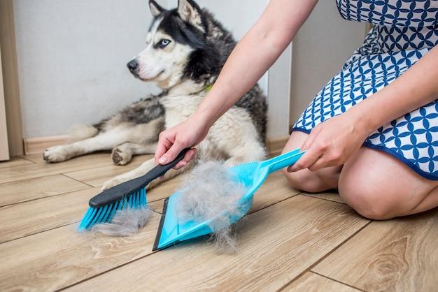 女性が自宅でちりとりとほうきで犬を脱皮した後、犬の毛を取り除く
