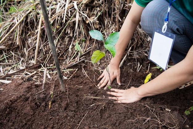 한 여성의 손이 땅을 건조하게 유지하기 위해 묘목을 심었습니다.