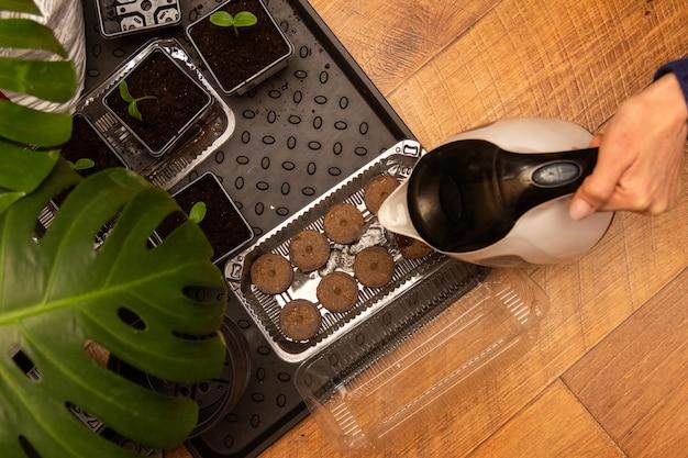 女性の手が急須から泥炭の錠剤に水を注ぎ、野菜の種を植えます