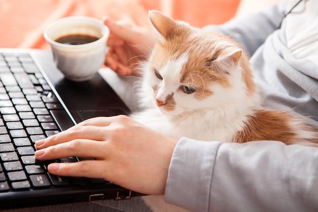 ノートパソコン、猫、コーヒーを片手にベッドに座っている女性。