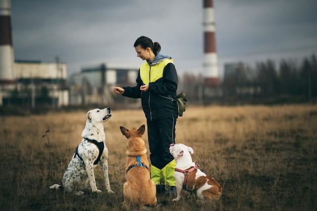 秋の野原に座って3匹の犬を訓練する女性