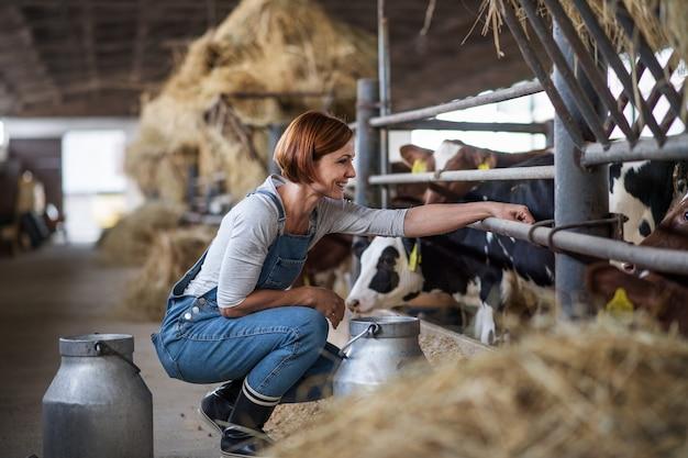 Работница с сеном работает на молочной ферме, сельском хозяйстве.