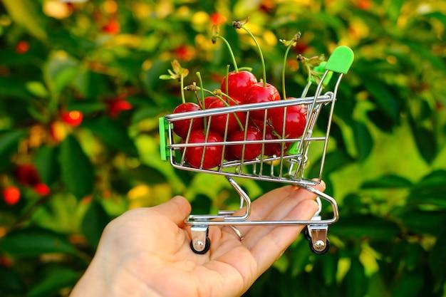 女性の手は手にミニショッピングトロリーを持ち、桜の木に沿ってカートを運びます