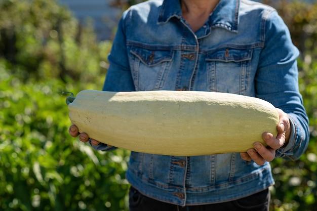 Женская рука держит кабачок, доставка свежесобранных овощей прямо из сада к вам.