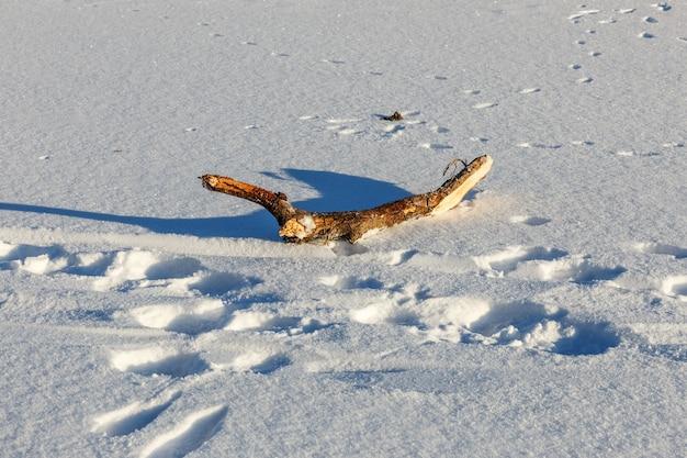 木の棒が雪の中にあります。木の枝。