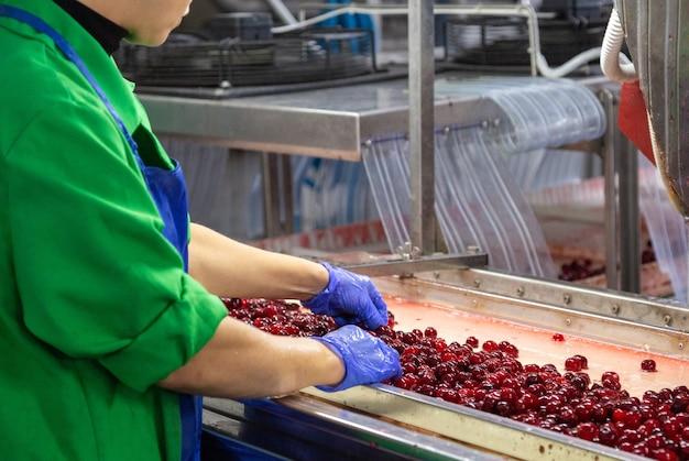 Рабочий в военной форме сортирует ягоды на конвейере. фабрика по уборке ягод.