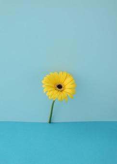 青い背景に黄色の美しい花。春のコンセプト。縦の写真..最小限のスタイル。