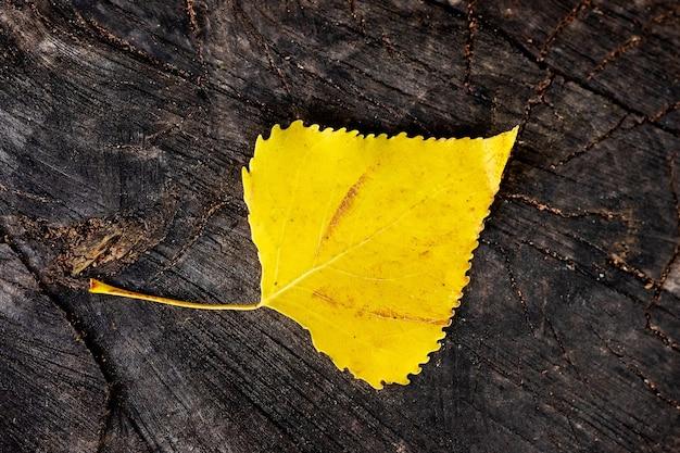 Желтый березовый лист упал на старый пень Premium Фотографии
