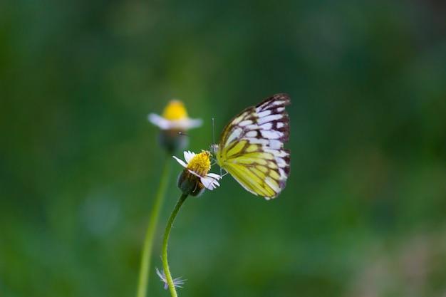 庭で春の間に花の植物で休んでいる黄色い草の蝶