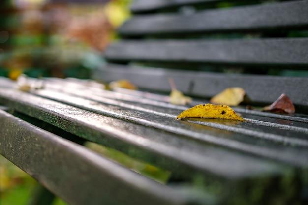 Желтый лист, упавший с дерева, лежит на мокрой скамейке в саду, освещенный заходящими лучами солнца.