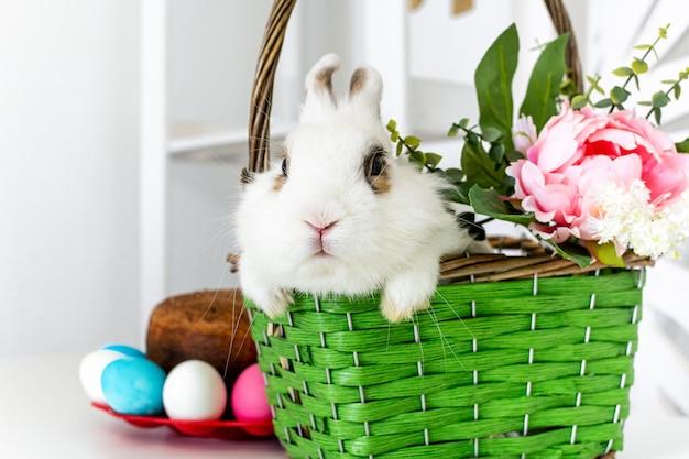 어린 사랑스러운 토끼가 꽃이 든 녹색 바구니에 앉아 있다