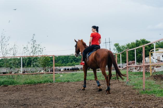 Молодая и красивая девушка учится ездить на чистокровной кобыле в летний день на ранчо.