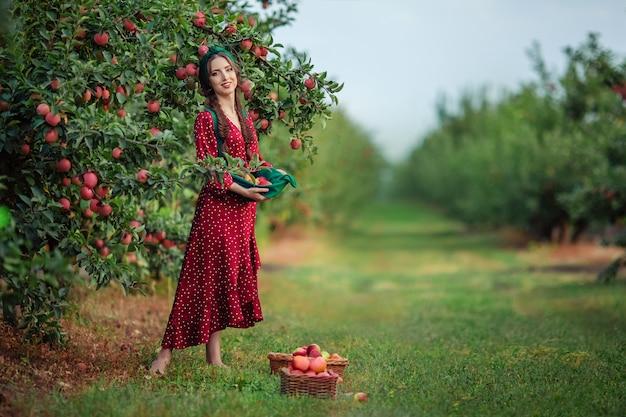 Молодая привлекательная женщина в красном платье передника зеленого цвета собирает спелые яблоки в плетеных корзинах в яблоневом саду.