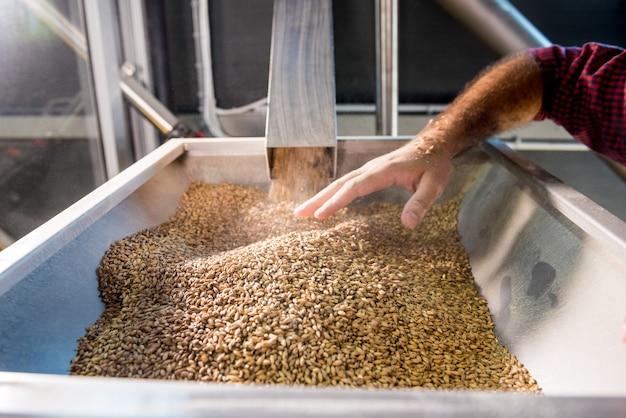 Молодой пивовар в кожаном фартуке контролирует помол семян солода на мельнице современной пивоварни.