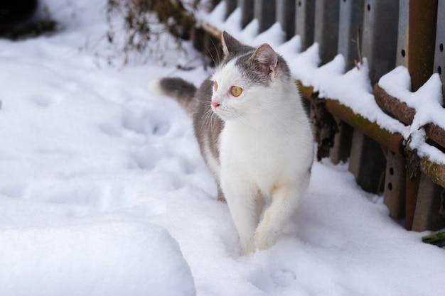 若い猫が柵に沿って雪の上を歩き、注意深く横を見る
