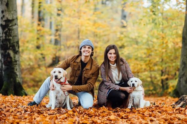若いカップルと2人の黄金のラブラドールが秋の公園を歩いています