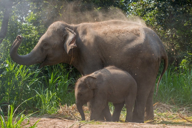 大人の隣にいる若い象。