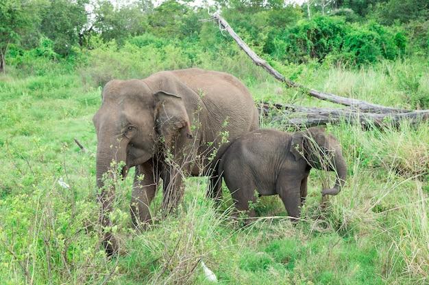 大人の象のすぐ隣にいる若い象。