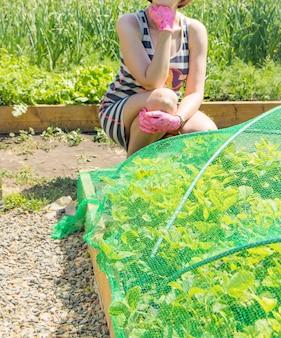 고무 장갑과 여름 줄무늬 드레스를 입은 젊은 정원사, 딸기 침대 옆에 앉아. 딸기 식물의 침대는 새로부터 딸기를 보호하기 위해 녹색 그물로 덮여 있습니다.